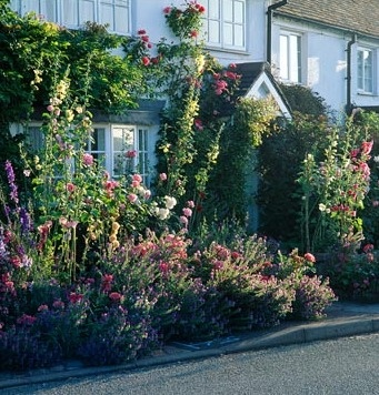 Small front garden with Alcaea, Rosa and Echium vulgare