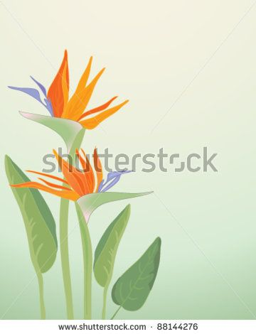 bird of paradise flowers and leaves vector illustration in eps 10 format by EMJAY SMITH, via Shutterstock
