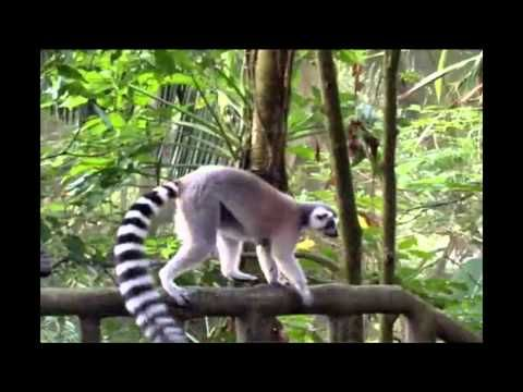 Amazing Rainforest - This enchanting app captivates a young reader with 17 informative videos on exotic animals from the mysterious rainforests of Asia and South America. It is designed to help a child to acquire knowledge on these animals using the documentary videos, 100s of fun facts and picture galleries.