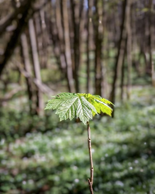 Spring is easily my favourite season there's colour everywhere and the blue skies are always a welcome sight.   The other day I was trying out the portrait mode on the Pixel 2 pretty happy with the way it performed.   #visitsussex #woodlandwalks #woodlandtrust #Uckfield
