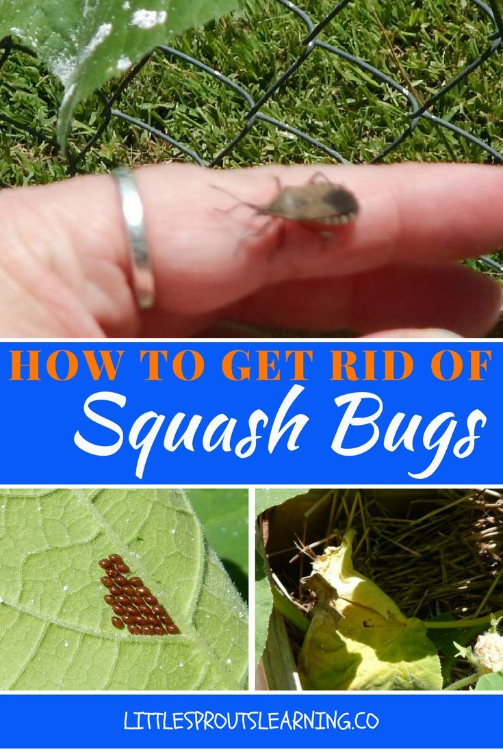 51 best images about go away bugs go away pests on pinterest