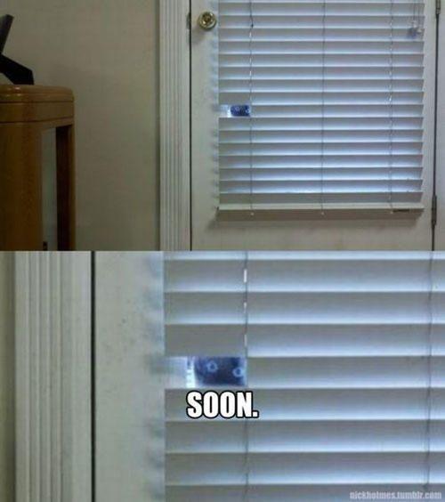 funny soon meme cat blinds <3