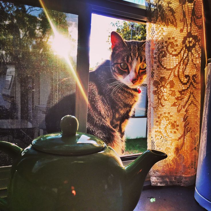 Kai on his window ledge of the motorhome. #kai #travel # Photography #Australia
