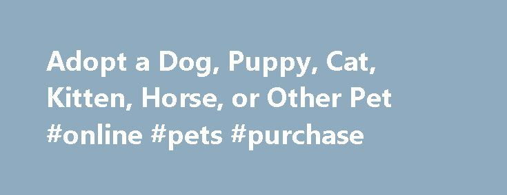 Adopt a Dog, Puppy, Cat, Kitten, Horse, or Other Pet #online #pets #purchase http://pet.remmont.com/adopt-a-dog-puppy-cat-kitten-horse-or-other-pet-online-pets-purchase/  How to Select the Right Pet? Click here for helpful tips from our SPCA Customer Service Staff to help you find and adopt the best pet for your lifestyle. Whether you re hoping to adopt a kitten, puppy, cat, dog, horse, parrot, exotic pet, rabbit, hamster, or any type of pet, you ll find the next love of your life at your…