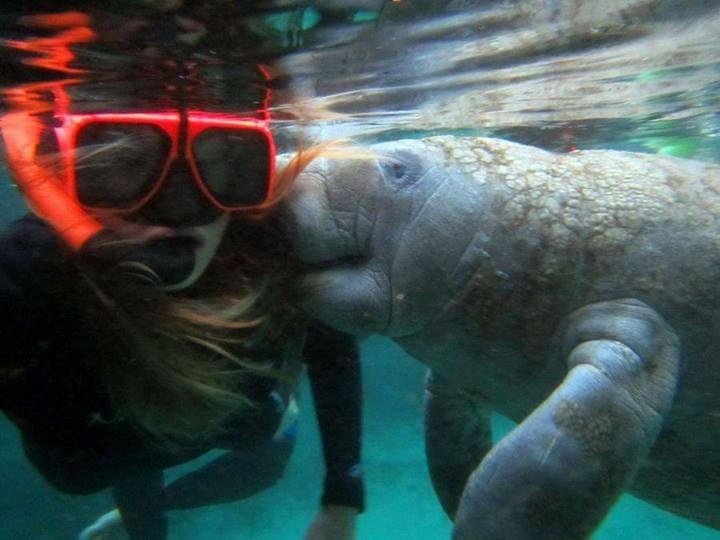 73 best Manatees! images on Pinterest | Manatees, Animales ...