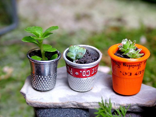 found a good use for all these old thimbles. They make  perfect planters for tiny succulent plants.  small world land: Miniature Greenhouse