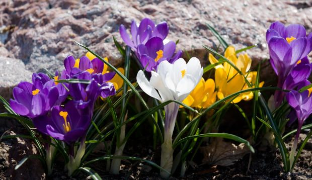 Blooming Bulbs - Essential Guide to Propagating Bulbs The propagation of bulbous plants or blooming bulbs is not at all difficult. The problem comes in knowing which blooming bulbs should be increa...