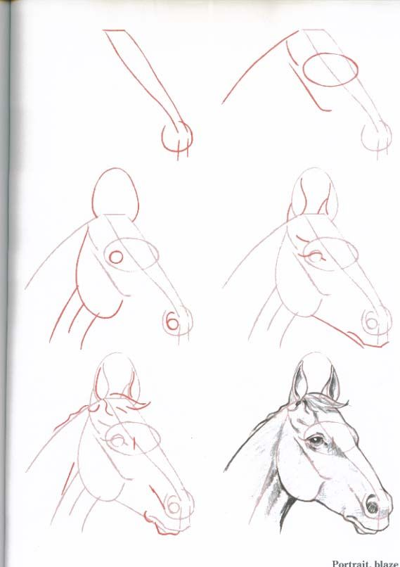 Best 25 how to draw horses ideas on pinterest horse drawing how to draw horses horse heaven ccuart Image collections