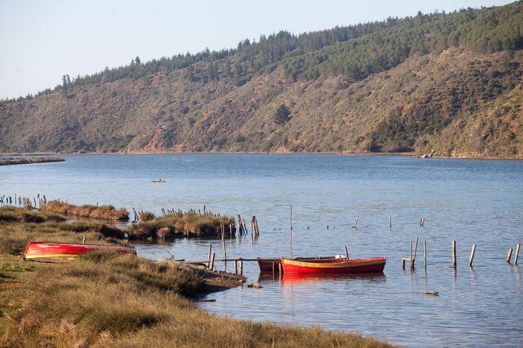 La Laguna de Cahuil, cuenta con vistas privilegiadas para el avistamiento de aves, principalmente, cisnes de cuello negro, patos, garzas, etc.