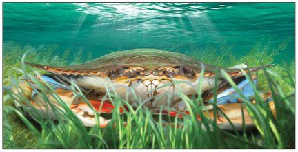 Crabgrass Crab Art Print or Canvas | Jon Brown Art | JWB Art Unlimited