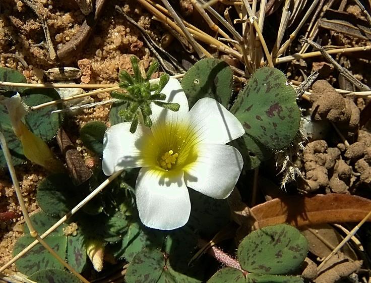Wild flowers in the desert