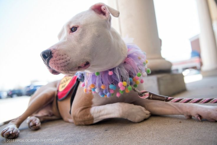 Adoption events save lives. They're usually the driving force behind rescue groups and animal shelters reaching the community and finding adopters. But while they are great for finding new homes, adoption events can be very difficult for dogs.