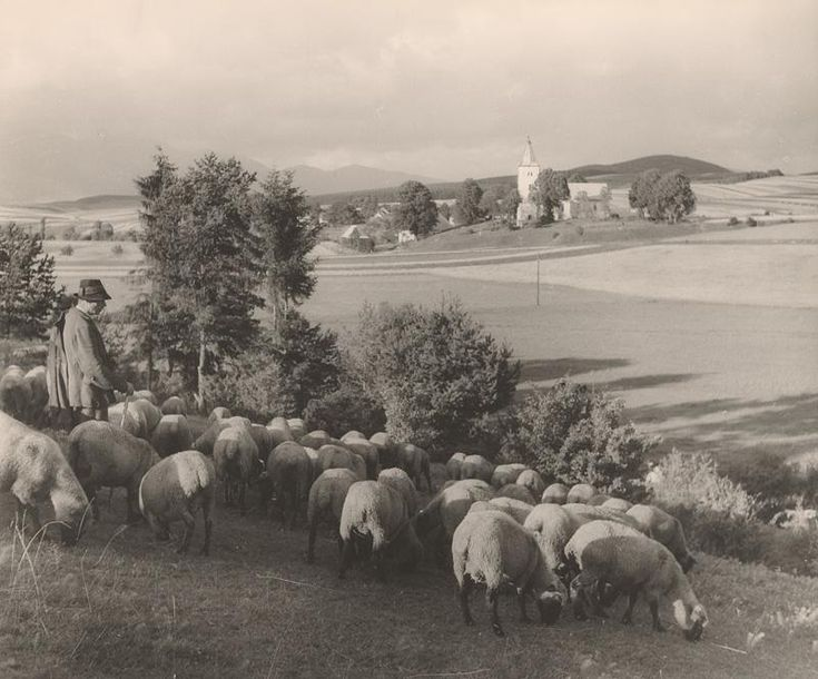 Ján Halaša Na paši. Turiec 1937