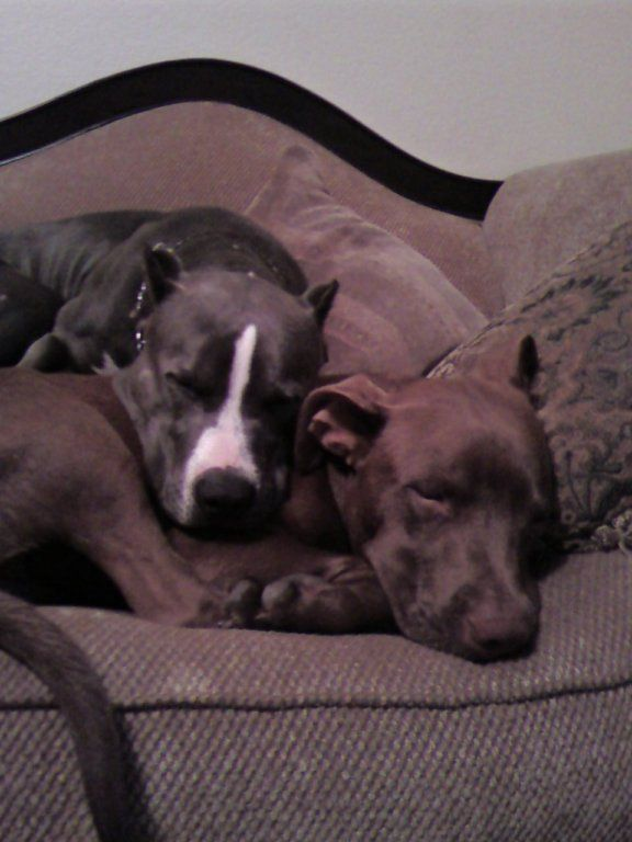 i learned a long time ago about the hypocrisy of peta. the group (and founder) has publicly denounced pit bulls and advocates breed specific legislation & euthanization. they also have a record of being their own high-kill organization. please don't support them. please support more legitimate animal advocacy organizations.