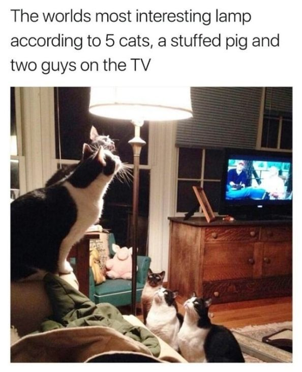 Funny Cat — 30 Pictures