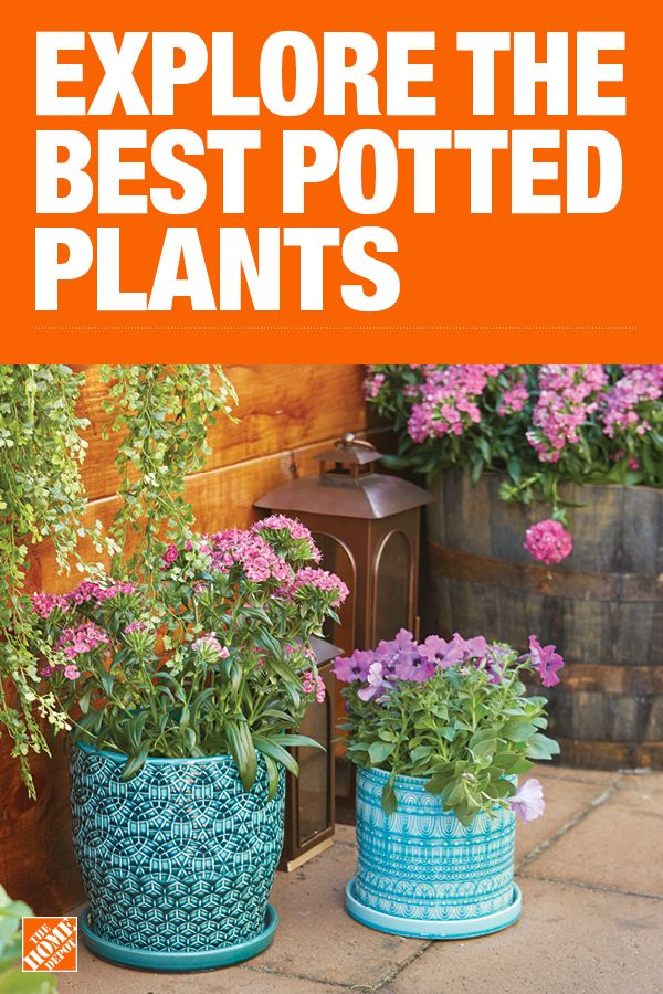 6 Top Container Plants For Small Space Gardens Plants Beautiful