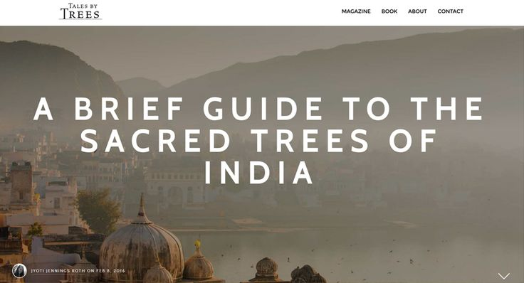 With a rich, colorful culture, thousands of years of history, and many intertwined religions, India has been called the land of gods and goddesses. In this spiritually charged world, special sacred trees occupy a respected, ceremonial position and some are even worshipped. A Tales by Trees article by Jyoti Jennings Roth. Read from: http://www.talesbytrees.com/a-brief-guide-to-the-sacred-trees-of-india/