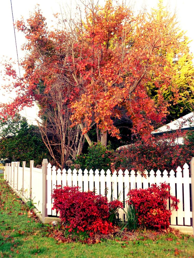 Late autumn colour along Rouse Street