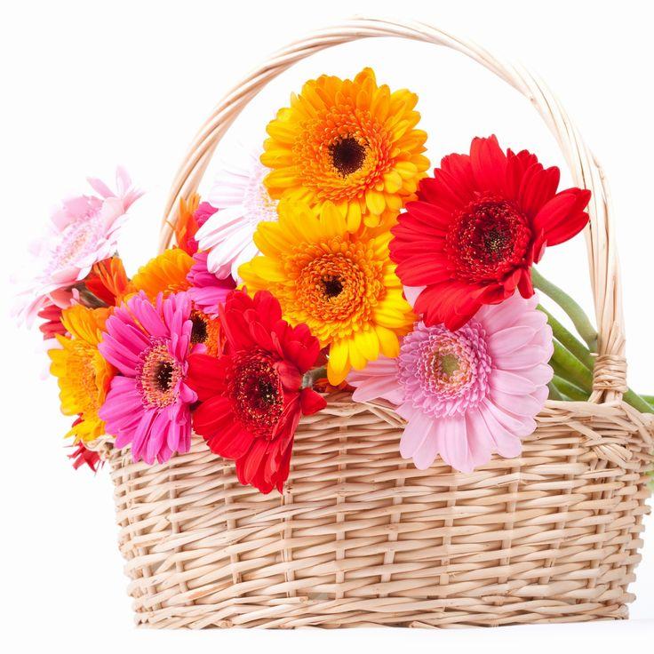 https://www.flowerwyz.com/  Cheap Flower Delivery,  Flowerwyz,Flower Wyz,Flowerwyz Flower Delivery,Flower Delivery,Flowers Online,Send Flowers,Flowers Delivery,Cheap Flowers,Cheap Flower Delivery,Online Flowers,Sending Flowers,Send Flowers