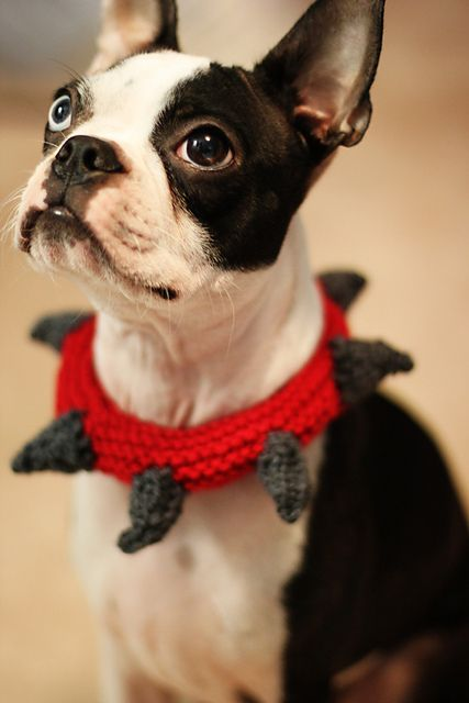 Ravelry: Spiked Dog Collar pattern by Melissa Turner