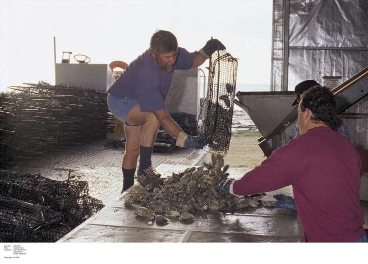 Oyster Farm in Denial Bay, Eyre Peninsula.  Image Source: SA Tourism Commission.