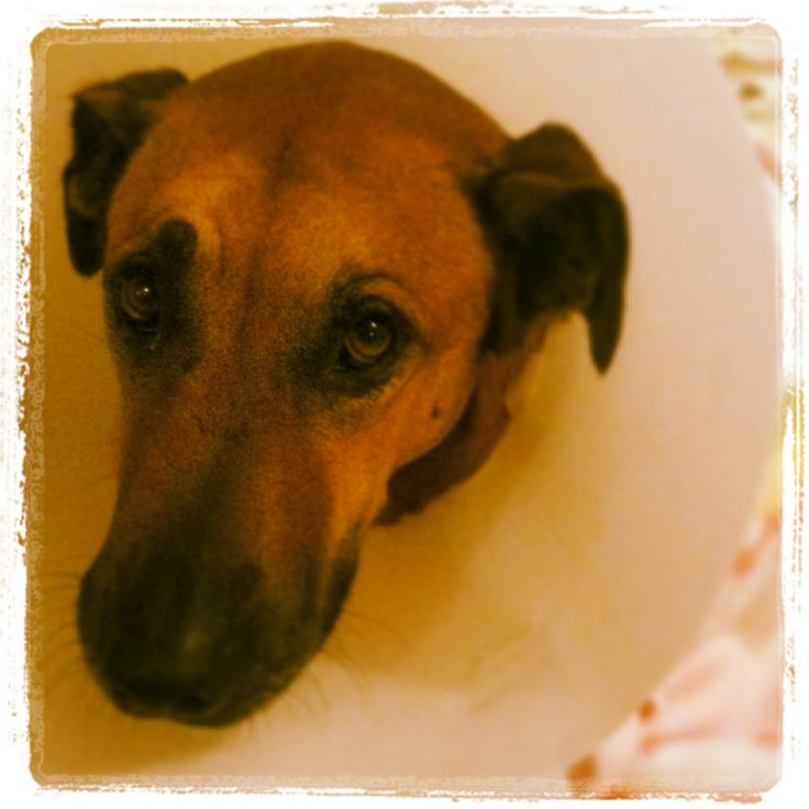 #amun #mydog #perro con su #collar #isabelino