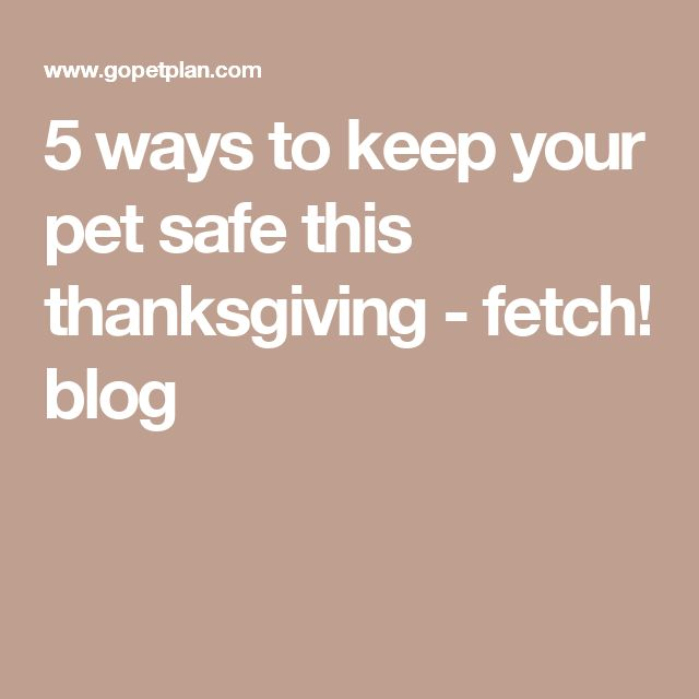 5 ways to keep your pet safe this thanksgiving - fetch! blog
