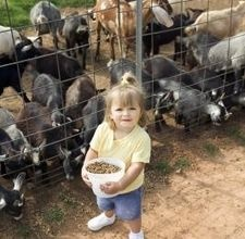 AGS Nigerian Dwarf Goat Information