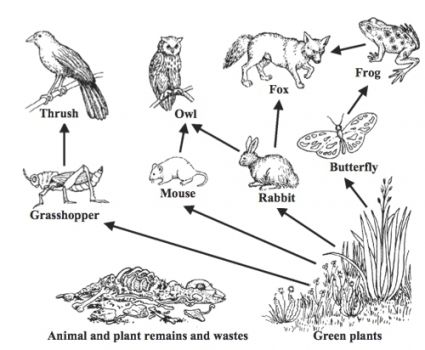 food chain coloring sheets food web coloring pages food