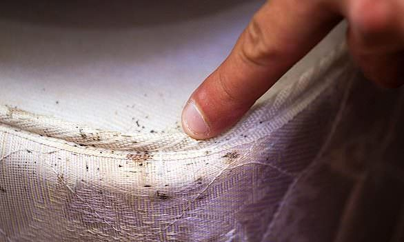Does baking soda kill bed bugs? DIY method to kill bed bugs. How to kill bed bugs? home remedies for bed bug infestation. Get rid of bed bugs naturally.