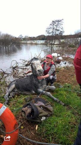 Osioł w niezwykły sposób podziękował za uratowanie życia. http://tvnmeteo.tvn24.pl/foto/najnowsze,1,1.html