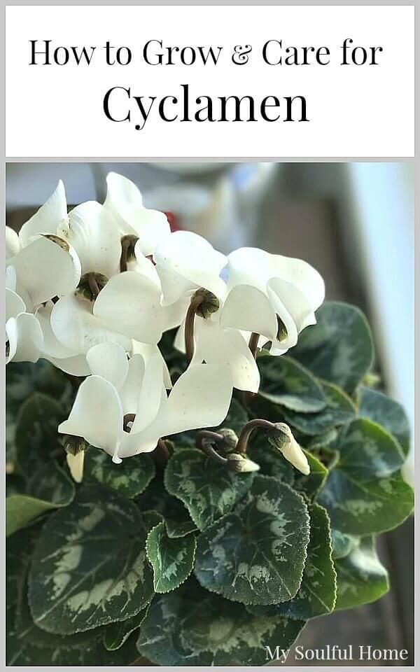 279 Best Images About Garden On Pinterest Gardens