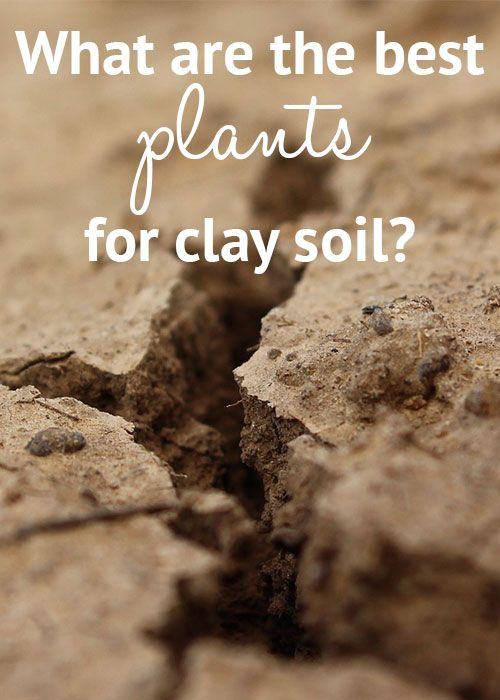 The Best Plants For Clay Soil Grow In Full Sun And Partial Shade Garden Pinterest