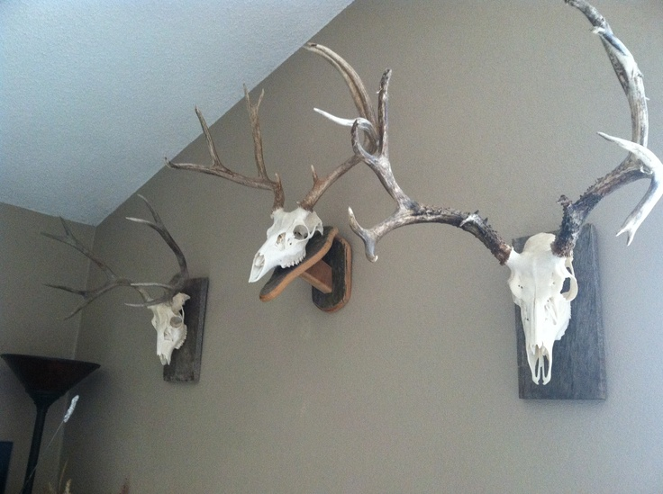 European mounts are rustic and country.