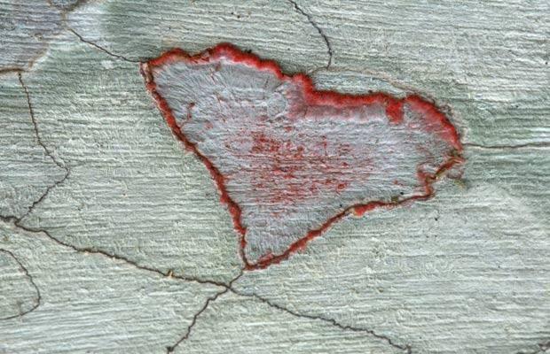 Heart-shaped Lichens (Crustose), Audubon Corkscrew Swamp Sanctuary, Florida: Hidden Heart, Heart Shap Lichen, Heart Nature, Swamp Sanctuari, Heart Shapes, Corkscrew Swamp, Lichen Crusto, Audubon Corkscrew, Nature Heart