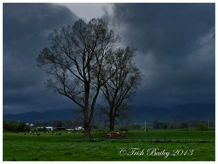 Taken by Trish Bailey in New Zealand, this image made TVOne news