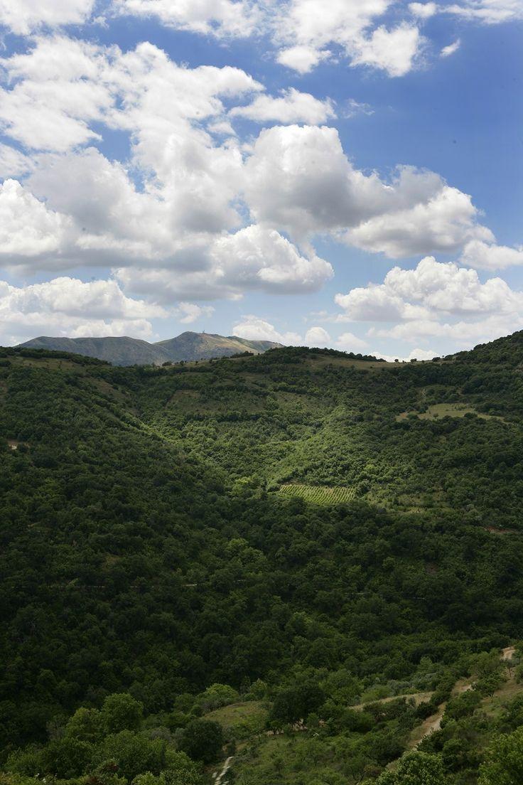 Ray of light #rapsani #tsantali #wine #adventure #epxerience #oenotourism