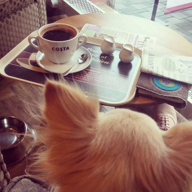 Bailye enjoys her #coffeetime in #costacoffee   #Brno #rainyday #czechrepublic🇨🇿 #chihuahuasofinstagram #chihuahua #americano #dogslife @costacoffeecz @costacoffee #costacoffeecz