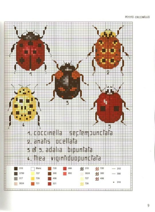 Gallery.ru / Photo # 11 - MARABOUT Insects - tatasha Cross stitch beetles with scientific labels
