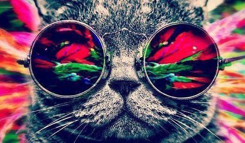 El Gato Sabe Donde Vives u.u