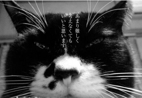 鉄男家の猫ソックスポストカード あまり難しく