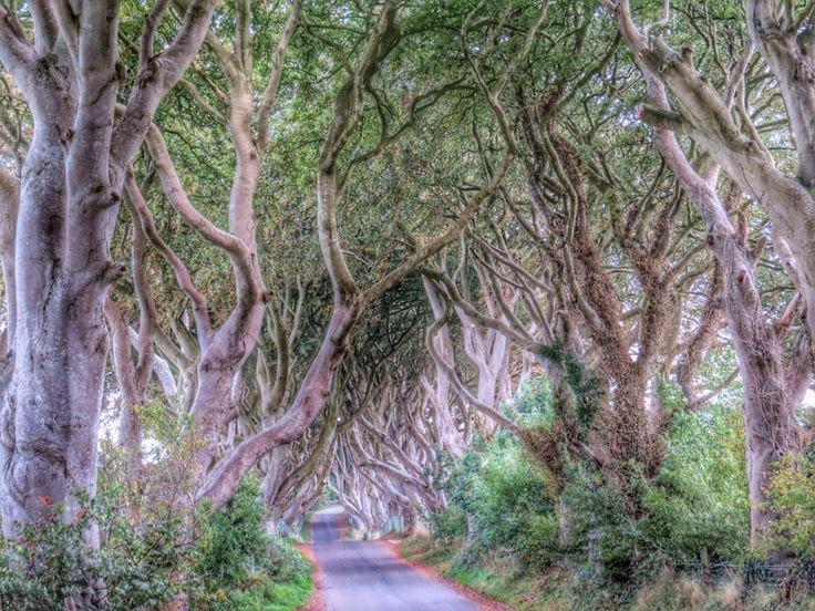 Dark hedges, Stranocum, Co. Antrim, Northern Ireland