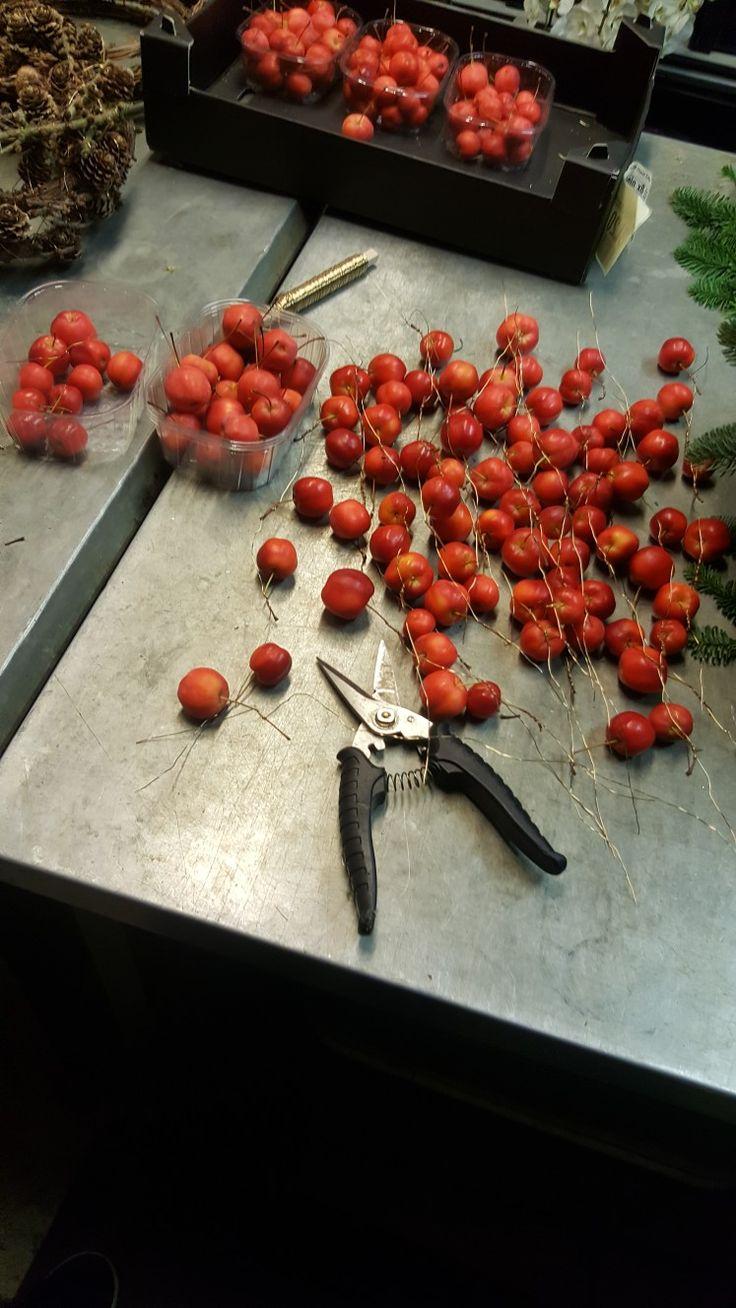 Ons. 1. Nov. 1. Jeg ranket opp eplene på ståltråd. 2. Ranke-teknikk. 3. Ståltråd, epler og saks. 4. Det gikk bra og få riktig mellomrom mellom eplene. 5. At det er lurt å holde lenger ut på tråden når du skal surre den rundt stilken. 6. Jeg kunne vært mer varsom for mange av stilkene brakk i det jeg surret tråden rundt.