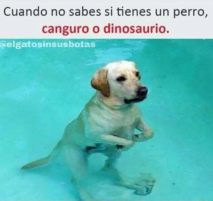 Mi Perrito No Puede Ser Memes Funny Memes New Memes