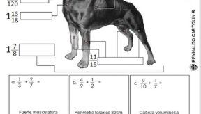 Suma y resta de fracciones heterogeneas