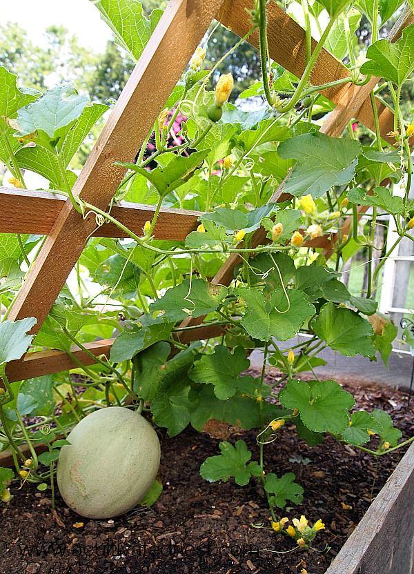 Vegetable garden tour 2014 pinterest gardens raised for Growing vegetables in raised beds