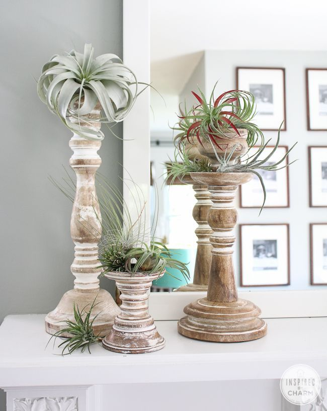 Decorating with airplants using candle sticks