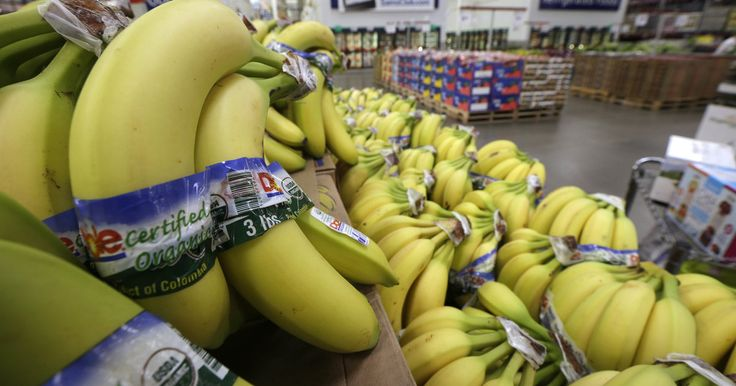 Your Favorite Banana Is Facing Extinction As Deadly Fungus Spreads