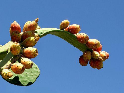 Karpathos Fruits