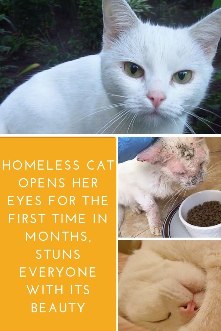 Kittens For Adoption Henderson Nv Some Kittens Meowing In Distress Cute Cat Names Cute Cats Cute Animals